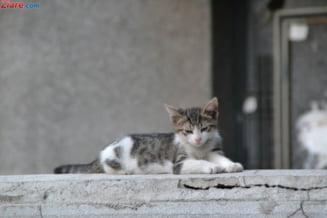 Primaria Capitalei vrea sa sterilizeze gratuit cainii si pisicile fara pedigree, dar cu stapan