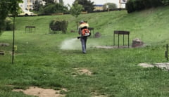 Primaria Constanta a inceput actiunile de dezinsectie