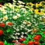 Primaria Resita da flori de luna curateniei