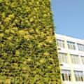 Primaria Sectorului 4 vrea sa amenajeze gradini verticale pe fatadele blocurilor si pe cladiri publice cu bani europeni
