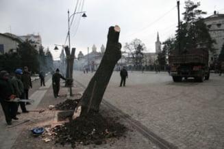 Primaria din Iasi, amendata pentru ca a taiat ilegal copaci
