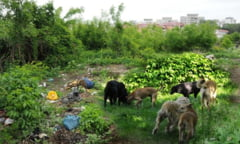 Primaria ne lasa la cheremul bolilor: Bacaul, invadat de caini, buruieni si capuse