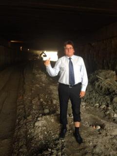 Primarul Timisoarei, exasperat: Nu pot alunga ciorile! Sunt inteligente si punctuale