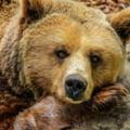 Primele ordine pentru uciderea a doi urși, publicate în Monitorul Oficial