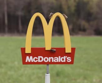Primul restaurant McDonald's pentru... albine (Video)