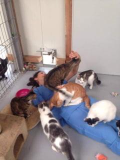 Primul spital pentru animale fara stapan din Romania: Cine ajunge aici si ce se intampla apoi Interviu