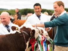 Printul William, din nou student: Va studia agricultura la Universitatea Cambridge