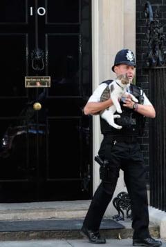 "Problema spinoasa la nivel inalt in Marea Britanie: Ar fi nevoie de o ""cireada"" de pisici!"