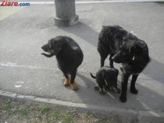 Procurorul General: Nu cainii au omorat femeia din Parcul Obor. Ce au gasit legistii