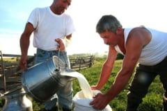 Productia de lapte, declarata pana pe 14 mai