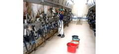 Produse agro-alimentare din judetul Buzau ar putea ajunge in Kuwait