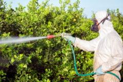 Produsele fitosanitare, tratamente eficiente in lupta contra daunatorilor?