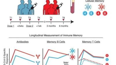 """Profesor român din SUA, despre imunitatea conferită de vaccin: """"Titrurile de anticorpi se reduc în timp, dar memoria răspunsului de tip B nu. Ba chiar crește"""""""