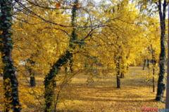 Prognoza meteo pentru la toamna: Cum va fi vremea pana in noiembrie