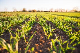 Program de guvernare in materie de agricultura: Vor continua masurile de sprijinire a reluarii activitatilor economice afectate de pandemie