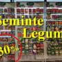 Promotia saptamanii 12 - 16 iunie, la AGRO ZOO MARKET din Pitesti! Seminte de legume - 30% reducere