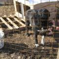 Protest pentru viata cainilor fara stapan, la Bucuresti
