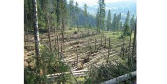 Punerea in valoare a masei lemnoase rezultata in urma doboraturilor de vant se apropie de sfarsit la DS Harghita si urmeaza licitatiile publice