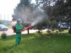 RER Ecologic Service trimite echipe de dezinsectie in toate parcurile orasului