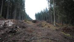 REVOLTATOR! Companiile austriece MACELARESC padurile din Romania. Autoritatile aresteaza tarani cu carute de vreascuri