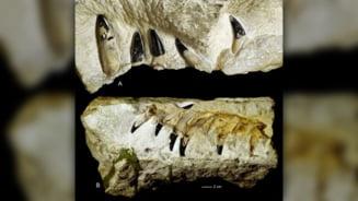 Ramasite ale unui monstru marin cu o muscatura mai puternica decat a lui Tyrannosaurus rex au fost gasite in Polonia
