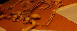 Ramasitele unui copil, ingropat cu ceva bizar in gura, au fost gasite intr-o pestera din Polonia