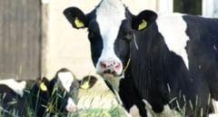 Razie la crescatorii de animale din Mures care au cerut ajutoare de la stat