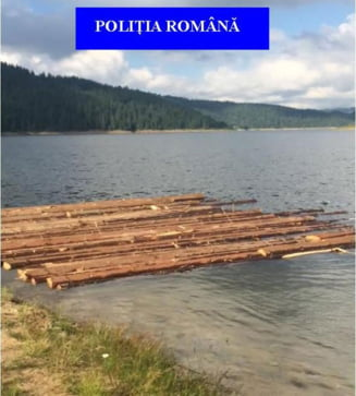 Razii la forestierii din Belis, prinsi ca au taiat ilegal de 250.000 de euro. Primii saltati: primarul si seful ocolului silvic