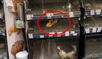 """Reactia Mega Image in scandalul sobolanilor fotografiati intr-un raft al magazinului din Sectorul 1: """"Ne este cunoscuta situatia"""""""