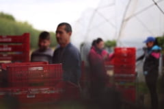 Reactia ambasadei Romaniei din UK, dupa ce un charter cu muncitori a ajuns in Marea Britanie