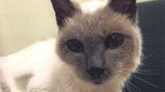 Record mondial: Secretul pisicii de 30 de ani