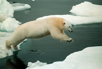 Reducerea emisiilor de carbon ar putea salva ursii polari