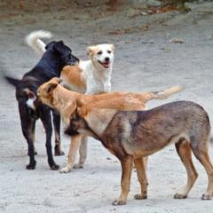 Referendumul pentru eutanasierea cainilor maidanezi, aprobat