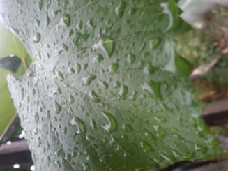 Revin ploile - informare meteo de vreme rea