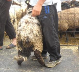 Revolta ciobanilor: O lege impune numarul maxim de caini la stana. Ce spune ministrul Agriculturii
