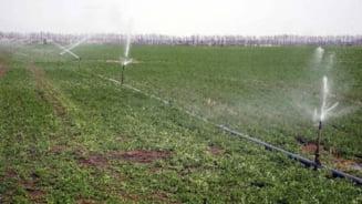 Romania, paradis al agriculturii ecologice- mai mult mit decat realitate