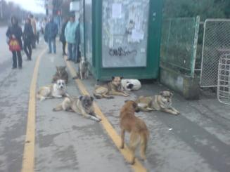 Romania, tara lui Dracula infestata de caini vagabonzi - Forbes
