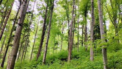 Romania a vandut in 2019 lemn in valoare de peste doua miliarde de lei