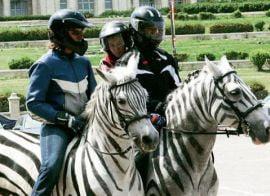 Romania ademeneste turisti straini cu cai vopsiti in zebre