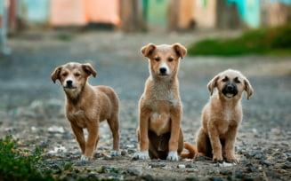 Romania este sursa numarul unu de caini adusi ilegal in Germania