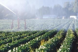 Romania exporta aproape jumatate din produsele ecologice
