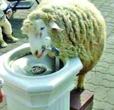 Romania si sindromul oii ratacite (Opinii)