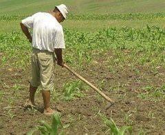 Romania trebuie sa dea inapoi 41 de milioane de euro din fondurile UE pentru agricultura