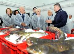 Romania trebuie sa restituie UE banii pentru bursa de peste de la Tulcea. A fost inchisa dupa inaugurarea premierului Dancila
