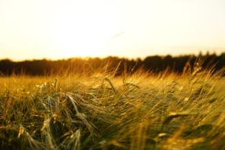 Romania va avea in 2021 un an agricol de exceptie. Explicatiile date de specialistii in agronomie