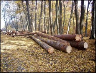 Romsilva a lansat o noua metoda de depistare a taierilor ilegale de copaci