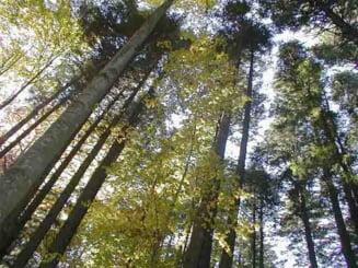 Romsilva va impaduri 36.000 de hectare de terenuri in 2009