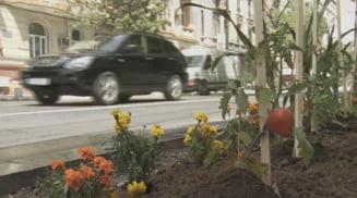Rosii plantate pe bulevard, in centrul Bucurestiului (Video)