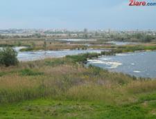 Rovana Plumb: Lacul Vacaresti va fi declarat zona protejata pana la sfarsitul anului