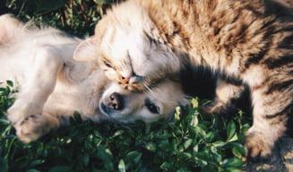 Rusia a produs primul lot de vaccin anti-COVID din lume pentru animale